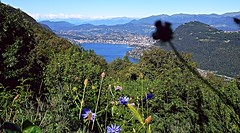 """2016 8 10 Panorama su Lugano e il Monterosa dal """"Belvedere di Lanzo d'Intelvi"""" (mario_ghezzi) Tags: lanzodintelvi lombardia italia intelvi valledintelvi nikon coolpix nikoncoolpix p6000 coolpixp6000 nikonp6000 nikoncoolpixp6000 marioghezzi noreflex lugano svizzera ceresio lago lagoceresio lanzo lagodilugano cantonticino alpi monterosa belvedere belvederedilanzodintelvi"""