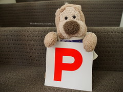About Time! (andiesopena) Tags: bear ted cute toy toys photography driving teddy brisbane license p toyphotography pplater tedmund plicense tedmundted