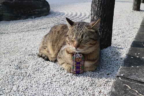 浦和玉蔵院の御守りちゃん2015