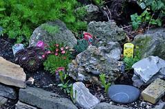 Alpine Plants (standhisround) Tags: garden rockgarden alpineplants alyssum saxifrage armeria densum deanthus