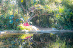serenity (Victoria Melekian) Tags: flowers plants nature gardens reflections palms pond bamboo fujifilmxpro1