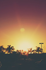 cali delight (thatgirlwiththekicks) Tags: california ca pink trees sunset sky orange usa sun yellow cali america golden evening purple pacific palm sunburst oxnard