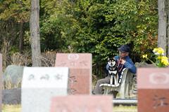 DS7_7669.jpg (d3_plus) Tags: park street cemetery japan walking temple tokyo nikon scenery bokeh outdoor fine telephoto  streetphoto  nikkor    fujisawa  thesedays 80200mm 80200  fineday     8020028  80200mmf28d  80200mmf28    80200mmf28af  d700  kanagawapref  nikond700   afzoomnikkor80200mmf28 afzoomnikkor80200mmf28s aiafzoomnikkor80200mmf28s aiafzoomnikkor80200mmf28sed chofukutemple muraokacastlepark