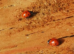 Which way should we go? (bonnie97756) Tags: world wood nature animals oregon ilovenature twins oneofakind bugs 100views ladybugs unlimited magicmoments naturescenes identicaltwins natureandanimals animalpictures closeshots views50 50plus 75100views views75 animalsnature views2650 justmeandmycamera naturegroupfromanimalstoplants 50viewclub views101200 landscapewildlife unlimitedphotos naturescomposition planetaanimal natureoftheworldunlimited iamnikon animalsandcrittersoftheworld flickrhobbyandtextures 100viewsunlimited bestgardenphotos 100viewsor10favorites natureandallthatisbeautiful flickrfree1millionpictures