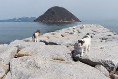 (GenJapan1986) Tags: travel sea animal japan cat island  kagawa    setoinlandsea    2015    sanagishima nikond610