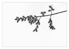 20150329-_T156257 (René Pütsch) Tags: blackandwhite bw monochrome iso200 fujifilm f80 xt1 aperture8 exposure1125 xf18135mmf3556rlmoiswr