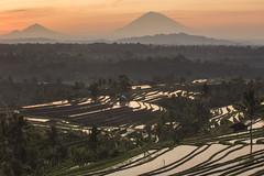 Morning Dawn at Jatiluwih (supryonoiputu) Tags: travel bali indonesia ricefield landcape jatiluwih subak