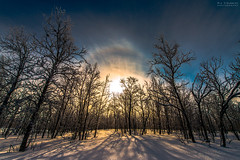 HaloTrees (AngryTheInch42) Tags: trees winter sun halo solarhalo