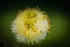 colftsfoot (inekehuizing) Tags: nature landscape spring natuur lelystad landschap voorjaar oostvaarderplassen inekehuizingfotografie