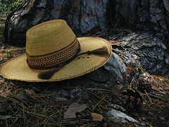 Dirge In Woods (Rand's World) Tags: tree nature hat pine poem day earth straw odc ibim georgemeredith