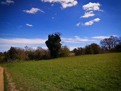 Shere (martin_rees) Tags: blue field clouds landscape spring surrey nik guildford colorefex