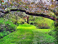 Beautiful spring in Arboretum Kalmthout, Belgium (jackfre2) Tags: flowers trees plants green belgium blossoms arboretum bushes domain kalmthout