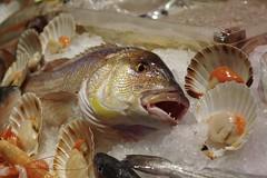 fresh fish (Mi che le) Tags: ice fishmarket pescheria ghiaccio dentice dentexdentex pectenjacobaeus conchigliadisangiacomo