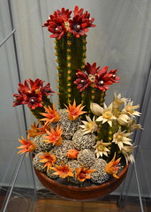 Marzipan Cacti [Szentendre - 6 December 2015] (Doc. Ing.) Tags: flowers plant flower hungary handmade catus marzipan hu craftsmanship szentendre 2015 marzipanmuseum centralhungary