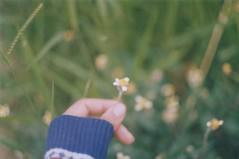 daisies. (larissanunesdealbuquerque) Tags: