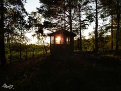 Midsummer Sun (a_lantz) Tags: sun nature rays