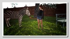 Visit with a zebracorn (Shylah Oceanlane) Tags: zebracorn slsecondlifesecondlifeavatar