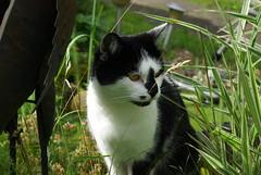 Claudia (ute_hartmann) Tags: cat claudia gras teich
