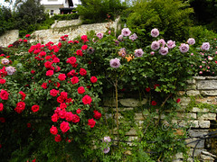 Balchik botanical garden, Bulgaria (cod_gabriel) Tags: roses bulgaria botanicalgarden balchik dobrudja balcic trandafiri dobrogea cadrilater grdinabotanic dobruja balchikbotanicalgarden grdinbotanic gradinabotanicabalcic