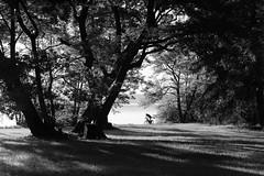 cyclist at the lake (StefanSpeidel) Tags: feldafing germany starnbergersee stefanspeidel elitegalleryaoi bestcapturesaoi