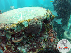 Scuba Diving-Miami, FL-Jun 2016-18 (Squalo Divers) Tags: usa divers florida miami scuba diving padi ssi squalo divessi