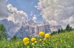 Dolomiten (Krnchen59) Tags: italien italy mountains flower nature pentax natur blumen berge elke dolomites sdtirol dolomiten k7 krner krnchen59