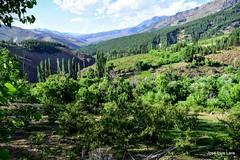 Huingan-C (pepelara56) Tags: patagonia mountain verde rboles verano soleado profundidad