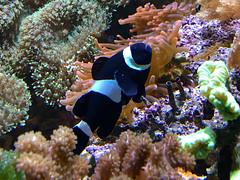 ZooWuppertal_BotanischerGartenRUB 2016_22 (spookybine) Tags: zoo wuppertal animals tiere nature natur underwater unterwasserwelt sea water fish