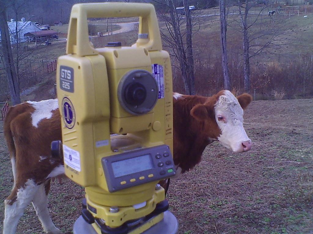 Cow near Instrument
