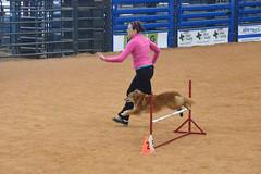 agility246 (jaimekay16) Tags: dog training austin agility k9 xpress nadac k9x
