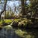 Carlito Springs