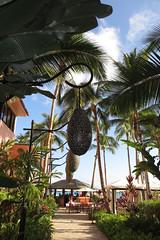 Royal Hawaiian Hotel - path to the Azure restaurant (BarryFackler) Tags: ocean lighting sea sky beach palms outdoors island hawaii polynesia hotel waikiki oahu landscaping anniversary lodging sunny gazebo foliage sidewalk palmtrees pacificocean lanterns tropical honolulu lamps fronds tropicalplants silveranniversary cabanas royalhawaiianhotel 2015 hawaiianislands 25thweddinganniversary theroyalhawaiian barryfackler barronfackler bettyfackler our25thweddinganniversary
