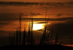 Spring Sunset..x (Lisa@Lethen) Tags: sunset sun nature clouds scotland spring skies silhouettes broom