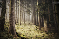 (desomnis) Tags: wood trees mist nature fog forest woodland landscape 50mm austria landscapes haze woods landschaft obersterreich 6d upperaustria canon50mmf14 landscapephotography bhmerwald bohemianforest dxofilmpack canon6d desomnis