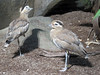 Birds (bookworm1225) Tags: zoo october 2014 minnesotazoo northerntrail tropicstrail