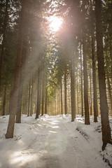 Winter (damn_unique) Tags: wood winter light sky sun sunlight snow clouds forest needles sundays