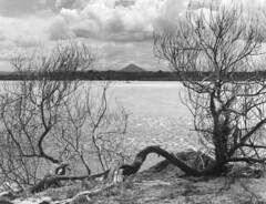 View of Mount Cooroy, Across the Noosa River (original photographs) Tags: film kodak trix australia photograph noosa 4x5 f56 largeformat noosariver 210mm tachihara gelatinsilver nikkorw ultrafine mountcooroy