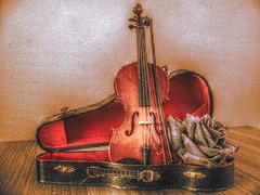 Mini Violin HDR Warm Tones (Jan van de Rijt) Tags: stilllife rose canon warm mini violin tones hdr 3xp chdk sx110is luminancehdr