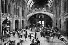 Flow II (Playing_with_light) Tags: uk england people bw london history nature water museum architecture flow movement nikon long exposure dinosaur time entrance moment naturalhistorymuseum nhm d800