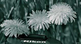 Nikon en herbes !!!!!!