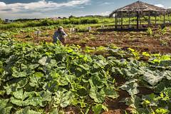 PAA Planaltina-DF (brasildagente) Tags: william familiar paa mst pequeno agricultura agricultor planaltina lavoura assentamento agicultor