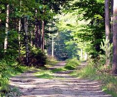 Forestry colours (Jacek Magryta) Tags: road county light summer sun tree green nature forest landscape colours village forestry poland jacek lower zgorzelec silesia zielonka wegliniec borydolnoslaskie zgorzeleccounty