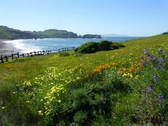 4/5/16 09:58 (joncosner) Tags: california marin marinheadlands northbay rodeobeach ggnra 2016 stars2