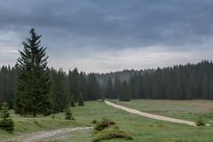 Asiago - Italy (Ture Adventure) Tags: italy mountain pine cloudy asiago
