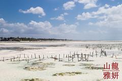 Seaweed farming along the Jambiani coast (DragonSpeed) Tags: tanzania indianocean zanzibar lowtide whitesand tidalflats jambiani seaweedfarming