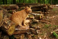 The master (Laurent Castiau) Tags: portrait detail nature animal forest cat 35mm canon lowlight chat naturallight wideangle fort dtail lumirenaturelle canoncamera canonlens grandangle focalefixe basselumire