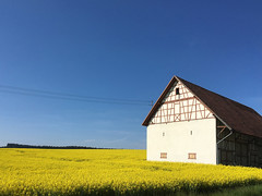 untitled . (helmet13) Tags: building colors barn rural landscapes spring bluesky powerlines simplicity agriculture rapeseed aoi 100faves peaceaward heartaward world100f platinumpeaceaward iphone6s