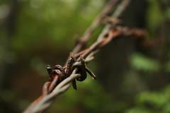 Practice (ianvickers) Tags: light metal wire focus close