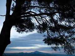 20/365 (jameswrodriguezphotography) Tags: sunset orange france mountains tree silhouette pine dusk 365 vaucluse ventoux mtventoux