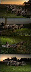 The Celtic Fox: Sculpture From Upcycled Horseshoes (irecyclart) Tags: sculpture art metal design wildlife fox fundraiser horseshoes upcycled